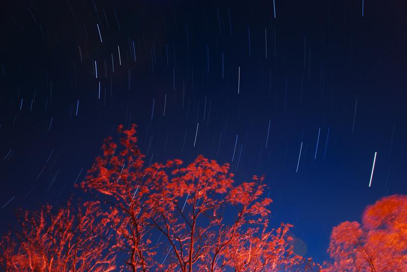 Bild. aeruginosa/FlickrCC