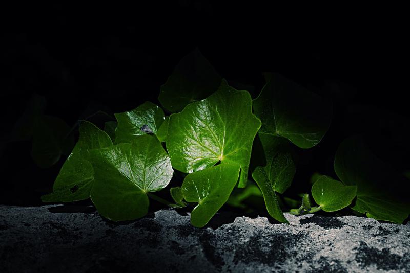 Bild: japondesarts/Flickr Creative Commons
